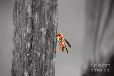 Photograph - Wasp by Terri Mills