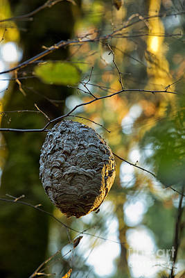 Photograph - Wasp's Nest by Belinda Greb
