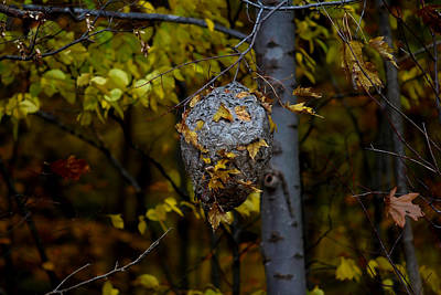 Photograph - Wasp's Nest by Jerome Lynch