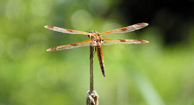 Blue Dragon Fly Photograph - Watch Captain by JC Findley