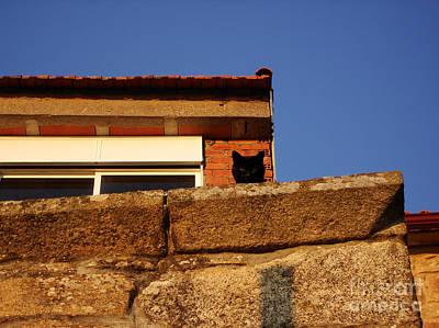 Photograph - Watch Cat by Menega Sabidussi