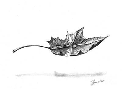 Fallen Leaf Drawing - Watch Me Soar by J Ferwerda