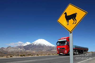 Llama Photograph - Watch Out For Llamas by James Brunker