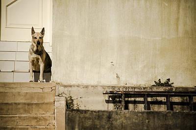 Watchdog Art Print