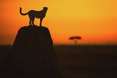 Cheetah Wall Art - Photograph - Watcher by Faisal Alnomas