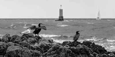 Observer Photograph - Watchers On The Coast by Patrick Jacquet