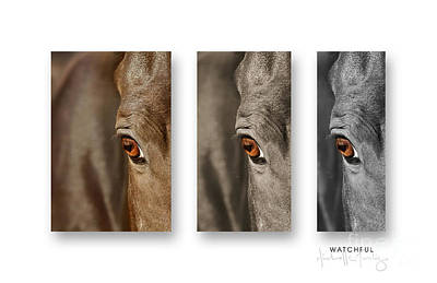 Watchful Triptych Art Print