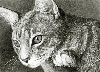 Drawing - Watchful by Ann Ranlett