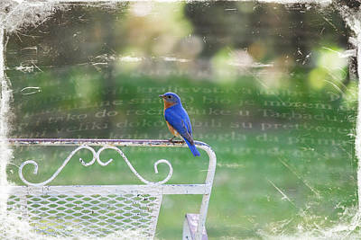 Photograph - Watchful Bird by Linda Segerson