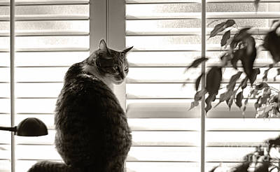 Photograph - Watchful Cat by Charline Xia