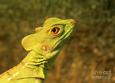 Watchful Eye Of The Green Basilisk Lizard  Art Print by Inspired Nature Photography Fine Art Photography