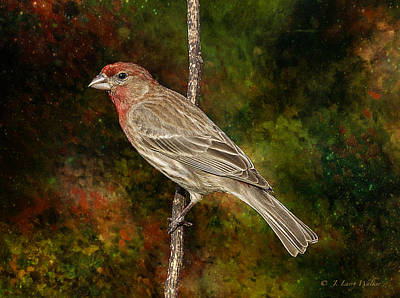 Print featuring the digital art Watchful House Finch by J Larry Walker