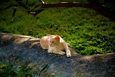 Photograph - Watchful Kitty by Ricardo J Ruiz de Porras