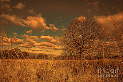 Watching From The Tall Grass Art Print by Jasna Buncic