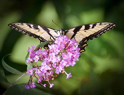 Virginia Butterfly Photograph - Watching by Kerri Farley