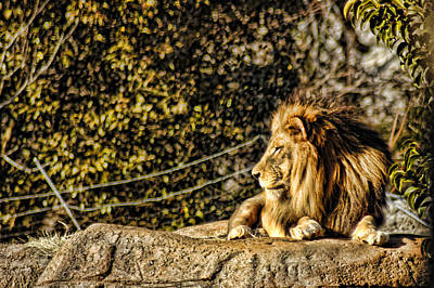 Photograph - Watching King by Barry Cole
