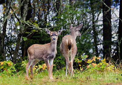Mule Deer Fawn Photograph - Watching Out For Mom by Mike  Dawson