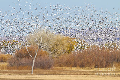 Art Print featuring the photograph Watching Over The Flock by Bryan Keil