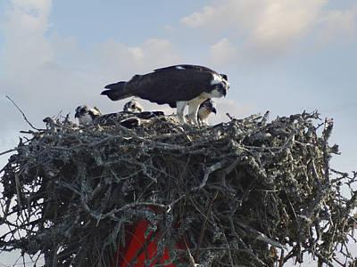 Hawks Digital Art - Watching The Kids - Ospreys by Mike McGlothlen