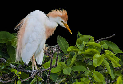 Photograph - Watching The Nest by Don Durfee