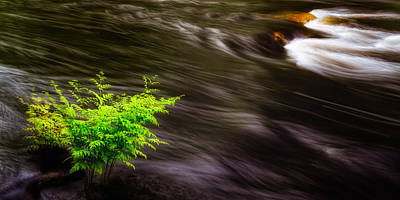 Photograph - Watching The River Flow by Jeff Sinon