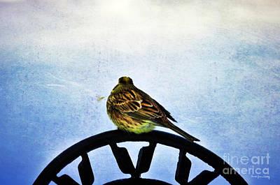 Photograph - Watching The World by Randi Grace Nilsberg