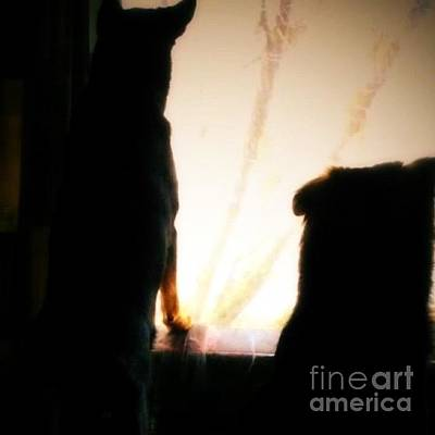 Gsd Photograph - Watching With Hannah And Darcy! #gsd by Isabella F Abbie Shores