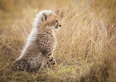 Cheetah Wall Art - Photograph - Watching You Mom by Faisal Alnomas