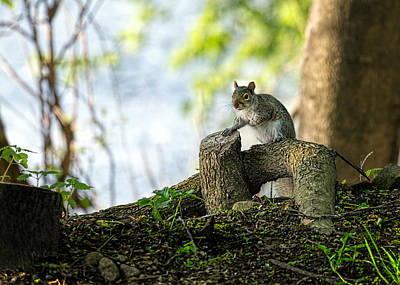Wildlife Photograph - Watching You Watching Me by Bob Orsillo