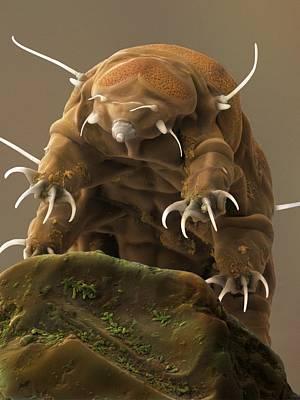 Granulatus Photograph - Water Bear Or Tardigrade by Science Photo Library