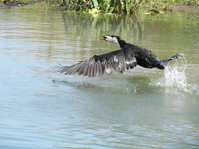 Photograph - Water Bird  by Joyce Woodhouse