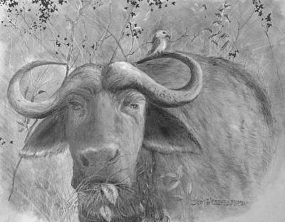 Drawing - Water Buffalo by Jim Hubbard