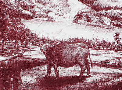Drawing - Water Buffalo by Jott DH