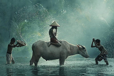 Water Splashing Photograph - Water Buffalo by Vichaya