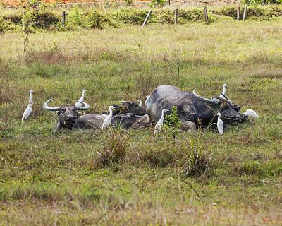 Photograph - Water Buffalos In A Mud Wallow Dthp430 by Gerry Gantt