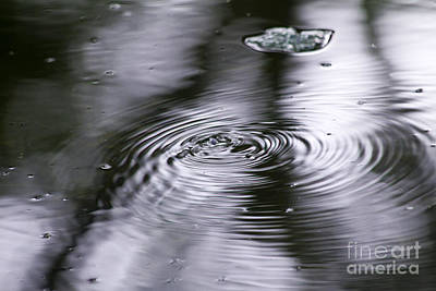 Photograph - Water Bug Ripples by Alycia Christine