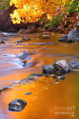 Photograph - Water Color Gold by Bill Singleton