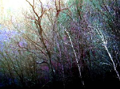 Photograph - Water Colored Woods by Sheryl Thomas