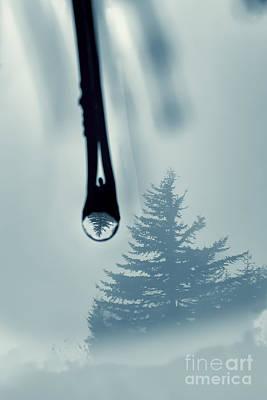 Water Drop With Tree Reflection Art Print by Dan Friend