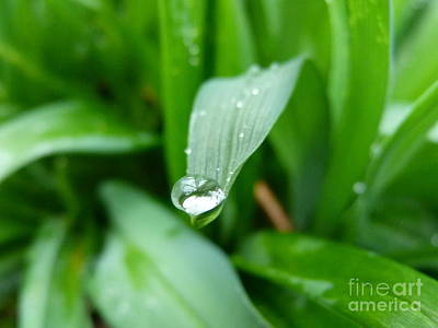 Photograph - Water Droplet On Grass by Jane Ford