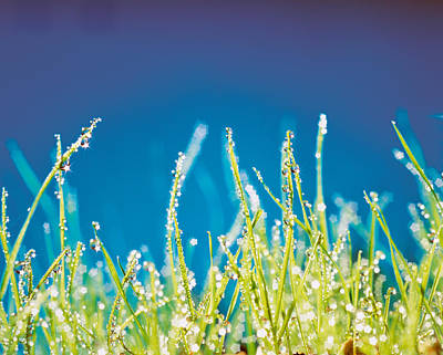 Close Focus Nature Scene Photograph - Water Droplets On Blades Of Grass by Panoramic Images