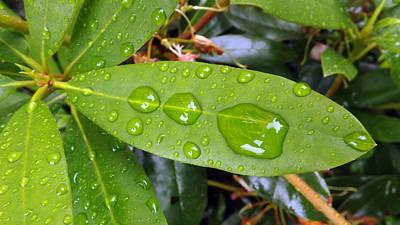 Water Droplets On Leaf Art Print