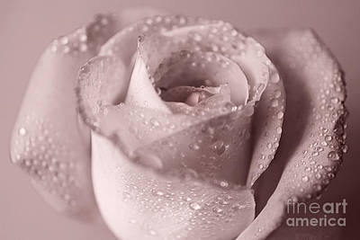 Photograph - Water Droplets On Rose by Eden Baed