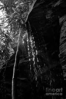 Water Drops After Storm Art Print by Dan Friend