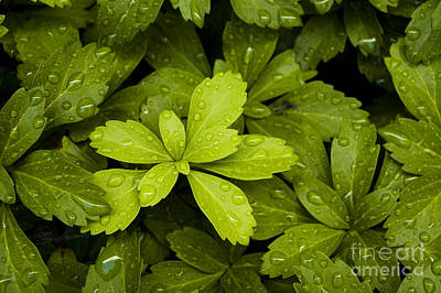 Photograph - Water Drops New Growth by Tom Brickhouse