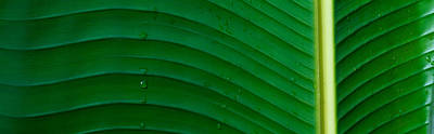 Water Drops On A Palm Leaf, Hawaii, Usa Art Print by Panoramic Images