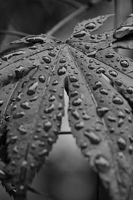 Art Print featuring the photograph Water Drops On Maple Leaf by Bob Noble Photography