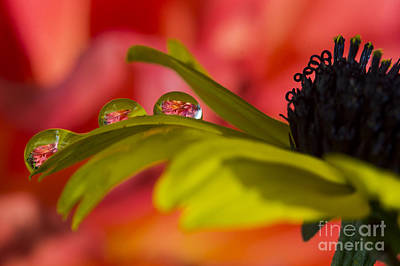 Photograph - Water Drops by Sonya Lang