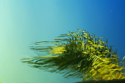 Photograph - Water Feathers by Florene Welebny