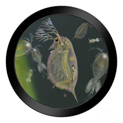 Plankton Painting - Water Flea - Water Fleas - Daphnia - Wasserfloh - Fine Art Print - Stock Illustration - Stock Image  by Urft Valley Art